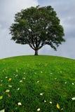 在青山的上面的一棵孤立树 免版税库存照片