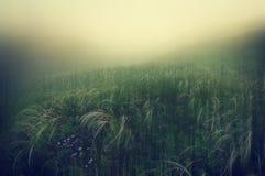 在青山的有雾的黎明 库存图片