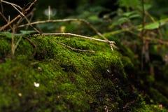 在青苔下的树 浅景深[DOF] 库存照片