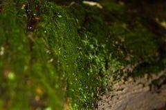 在青苔下的树 浅景深[DOF] 库存图片
