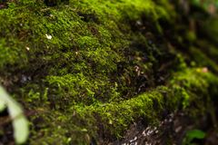 在青苔下的树 浅景深[DOF] 图库摄影