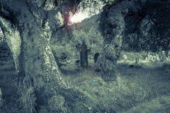 在青苔下的鬼的老坟园复了老树和长期 免版税库存图片