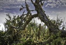 在青苔包括的停止的结构树 免版税库存照片