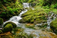 在青苔和蕨的瀑布 免版税库存照片
