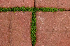 在青苔形成的T上写字生长在砖之间 库存图片
