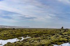 在青苔报道的变硬的岩浆领域在冰岛 免版税库存照片
