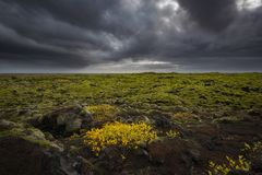 在青苔熔岩岩石包括的英里在冰岛 库存图片