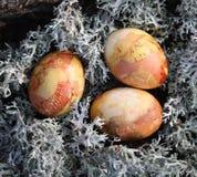 在青苔的复活节彩蛋 免版税图库摄影