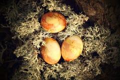 在青苔的复活节彩蛋 免版税库存照片