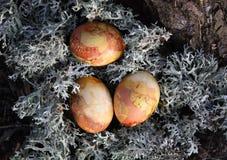 在青苔的复活节彩蛋 图库摄影