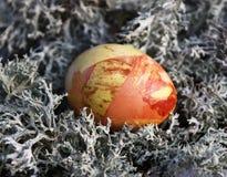 在青苔的复活节彩蛋 库存图片