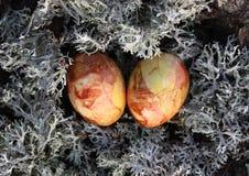 在青苔的复活节彩蛋 免版税库存图片