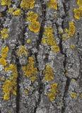 在青苔的树皮 免版税图库摄影