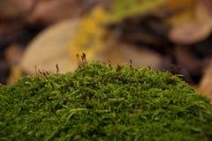 在青苔的植被在一个美丽的秋天森林里 免版税库存照片