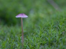 在青苔的真菌 图库摄影
