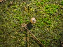 在青苔的蜗牛爬行包括地板 免版税库存照片
