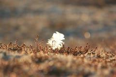 在青苔的鸟羽毛 免版税图库摄影