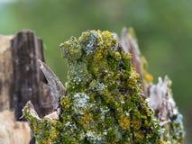 在青苔盖的树桩 库存照片