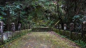 在青苔盖的老石桥梁在森林里 库存照片
