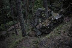 在青苔盖的黑暗的冰砾在森林反对风雨如磐的天空,树干 免版税图库摄影