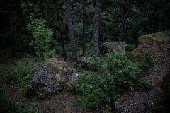 在青苔盖的黑暗的冰砾在森林反对风雨如磐的天空,绿色灌木 免版税库存图片