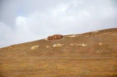 在青藏高原的冬天风景 库存图片