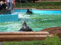 在青蛙喷泉特写镜头的青蛙雕塑 kislovodsk俄国 免版税库存图片