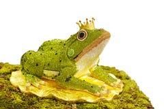 在青蛙的典雅的被设计的金刚石在白色背景,青蛙p 库存照片