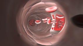 在静脉的流动的红血球 向量例证