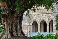 在非常老大厦前面的一个古老结构树 库存图片