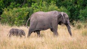 在非洲大草原的母亲和婴孩大象,在马塞语玛拉,Kenia 免版税库存照片