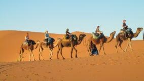 在非洲沙子沙漠沙丘的骆驼有蓬卡车 图库摄影