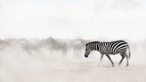 在非洲的尘土的斑马 免版税库存照片