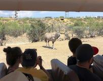 在非洲野生生物公园外面的一个徒步旅行队 免版税图库摄影