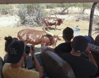 在非洲野生生物公园外面的一个徒步旅行队 免版税库存照片