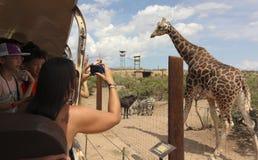 在非洲野生生物公园外面的一个徒步旅行队 图库摄影