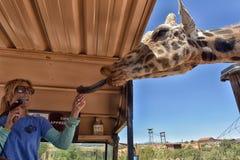 在非洲野生生物公园外面的一个徒步旅行队 库存图片