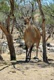 在非洲野生生物徒步旅行队动物园公园外面 图库摄影