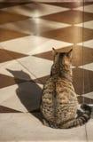 在面包店商店门的猫 免版税图库摄影