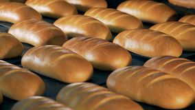 在面包店植物的新鲜面包 白面包许多大面包在盘子放置 股票视频