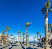 在面对海的木板走道的棕榈树 库存图片