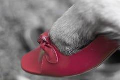 在鞋子的狗爪子 免版税库存照片