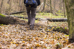 在鞋子的脚在森林道路 库存照片