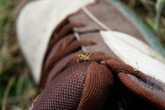 在鞋子的蚂蚱 免版税库存照片
