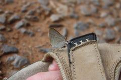 在鞋子的蝴蝶 免版税库存照片