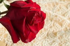 在鞋带背景的一朵红色玫瑰,情人节背景,婚礼之日 库存图片
