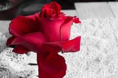 在鞋带背景的一朵红色玫瑰,情人节背景,婚礼之日 图库摄影
