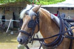 在鞔具和马眼罩等待的马 图库摄影