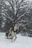 在鞔具的白马在森林公路在冬天 库存图片