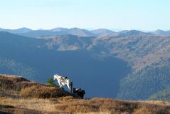 在鞔具的马在与蓝天的山 免版税库存图片